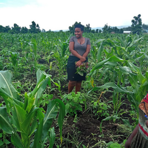 Frau in einem Feld, Organic Cereals
