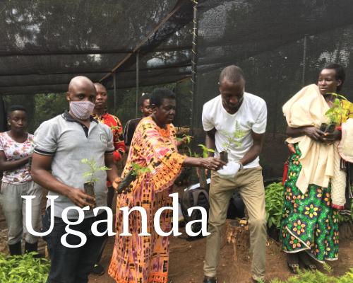 Stay Alliance Uganda